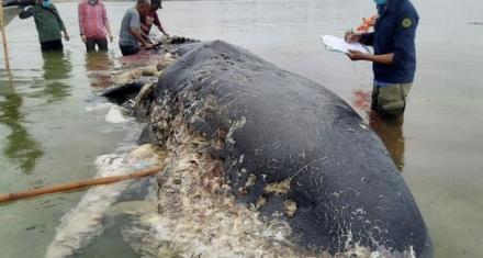 Indonesia: Cachalote murió con 6 kilos de plástico en el estómago