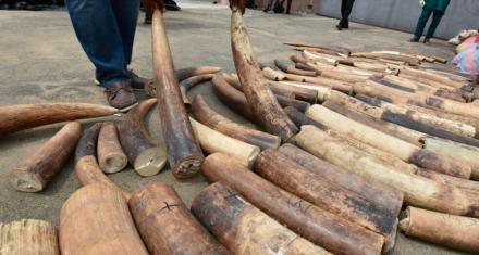 En Singapur se prohibirá el comercio de marfil a partir de 2021