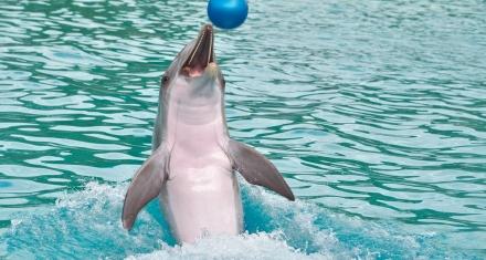 Canadá: Prohibirán por ley el cautiverio de ballenas, delfines y marsopas