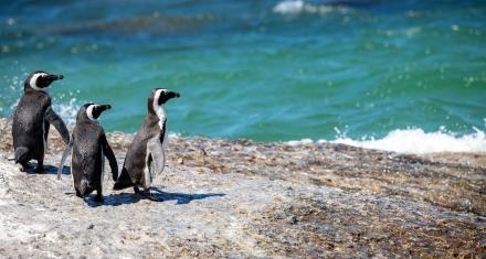 Brasil: Pingüino muerto tras ingerir una mascarilla N95