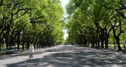 Para ayudar a limpiar el aire en la ciudad basta con elegir el árbol adecuado