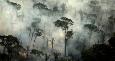 Brazilian amazon records big increase in fires
