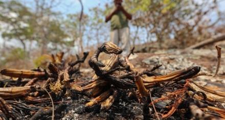 Bolivia: Intentan recuperar millones de hectáreas de bosque quemados en incendios de 2019