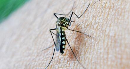 Argentina oficialmente libre de malaria