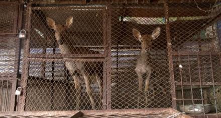 La organización PETA pide el cierre de mercado de animales en Asia