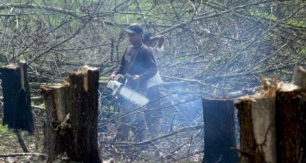 Indonesia: Once empresas deben 1.300 millones de dólares en multas por deforestación