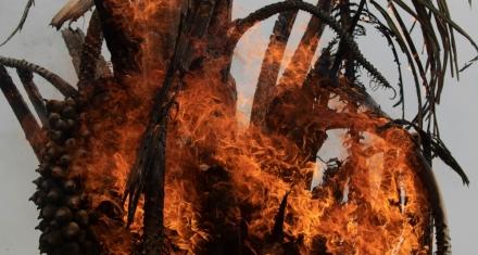 Brasil: Prohíben por cuatro meses el fuego para la siembra en la Amazonia