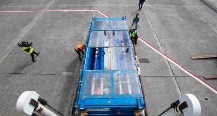 Islandia: Ponen en libertad a dos belugas que fueron encarceladas en Shangai