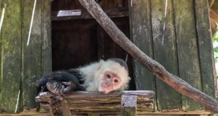 En México los animales exóticos como mascotas se convierten en un problema muy común
