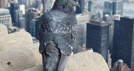 La rehabilitación de edificios antiguos pone en peligro a las aves