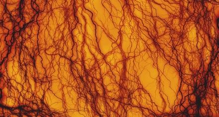 Crean vasos sanguíneos