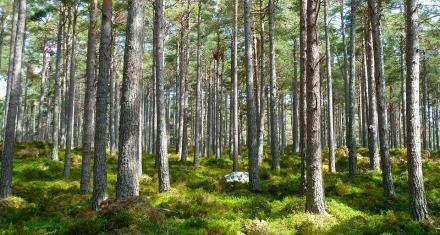 La Unión Europea pretende plantar 3 mil millones de árboles y reducir los pesticidas a la mitad