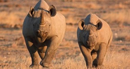 Los primeros humanos no provocaron la extinción de animales en África