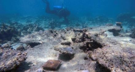 Corales de la Gran Barrera afectados por el cambio climático