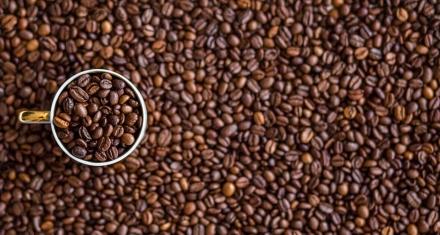 El 60 % de las especies de café silvestre del mundo están en peligro de extinción