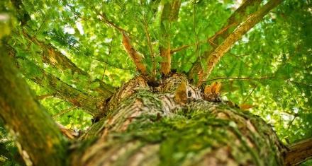 Honduras: Anuncian siembra de más de 2 millones de árboles