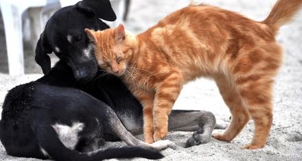 Descubren el enigma a cerca de la domesticación de los animales