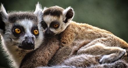 La Unión Internacional para la Conservación de la Naturaleza actualiza su lista roja de especies en peligro de extinción