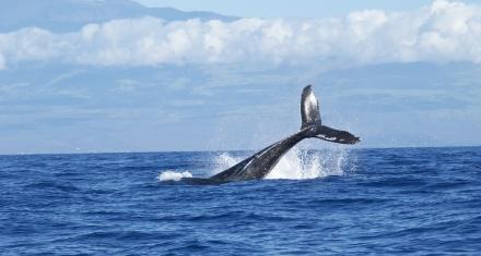 Brasil: El silencio de la pandemia atrae a las ballenas hacia el litoral