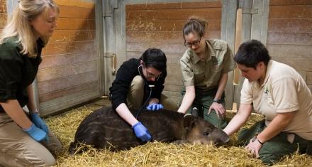 Estudiantes de medicina de Harvard hacen rotaciones en zoológicos