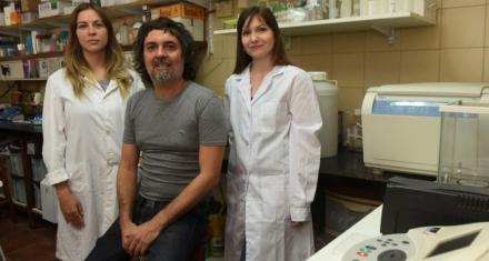 Cáncer de hígado: Avance argentino en estudio que logra disminuir la migración de células tumorales in vitro