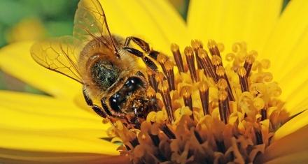 El polen como herramienta para resolver crímenes