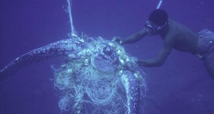 Isla de Dominica lanza una de las prohibiciones de plástico más fuertes del mundo
