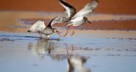 Descubren los factores que explican la diversidad de aves insulares