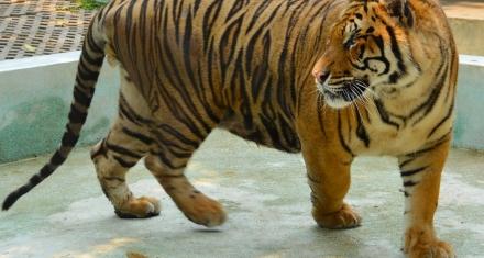 Francia: Prohibirán animales salvajes en circos y la reproducción en cautividad