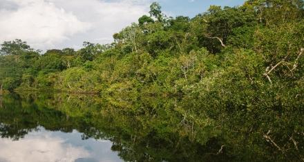 Amazonia: Indígenas piden la intervención de la CIDH ante amenazas y asesinatos
