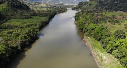 Brasil, Colombia, México y Perú analizan la degradación de sus bosques