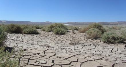El desierto de Atacama pierde la vida por las lluvias