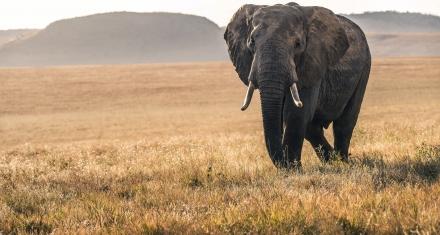 Wildlife in 'catastrophic decline' due to human destruction