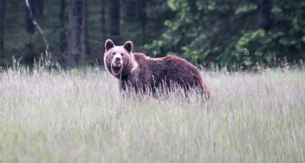 Portugal: Primer oso detectado en los últimos 176 años