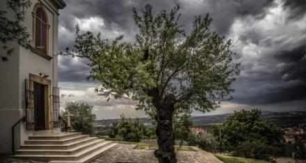 Hungría: Un almendro de 135 años elegido árbol del año 2019