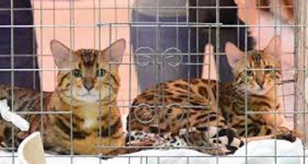 Maltrato animal: 3 años por matar a más de mil gatos para hacer empanadas