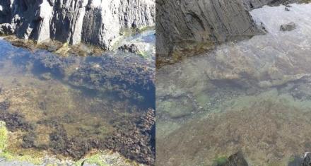 España: El cambio climático acaba con el 60% de una población de alga casi extinta en la Costa Brava