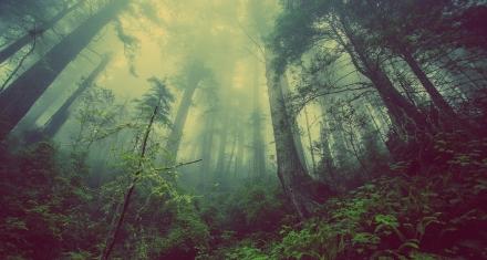 Los bosques están reteniendo el carbono durante menos tiempo que antes