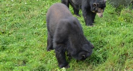 77 especies en vía de extinción se ven amenazadas por el cierre de zoológicos por la pandemia del coronavirus