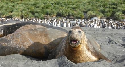 Antártida: El cambio climático reverdecerá aún más sus costas