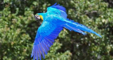 Ocho especies de aves que ya no podremos ver