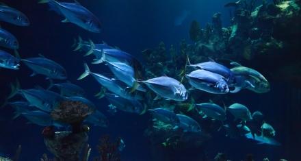 El calentamiento global está asfixiando a los océanos