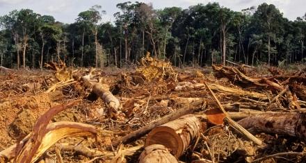 La deforestación del Amazonas vinculada a Macdonalds y otras marcas