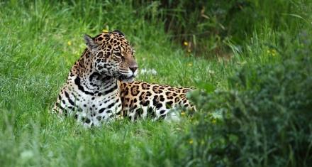 Brasil: Se instala una comisión externa para incendios en el pantanal