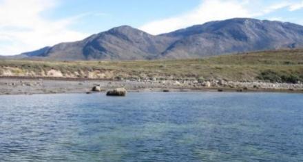 Praderas submarinas en el ártico poseen un enorme potencial como sumideros de carbono