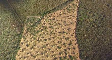 Las termitas construyeron la mayor estructura del planeta