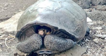 Ecuador: Hallan una tortuga gigante considerada desaparecida hace un siglo