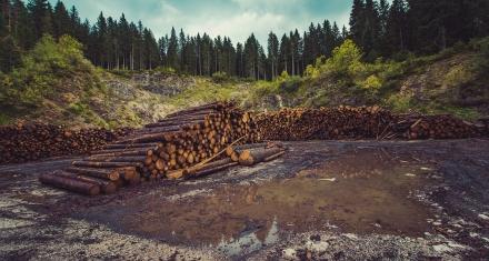 Colombia: En 2019 se deforestaron 158.894 hectáreas