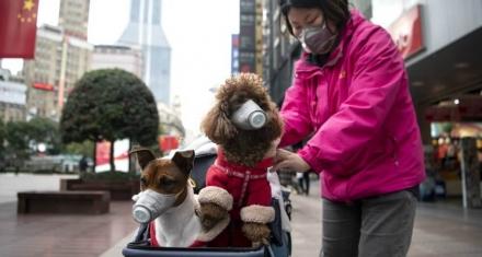 China: La parálisis por el coronavirus reduce en 25% la producción de CO2