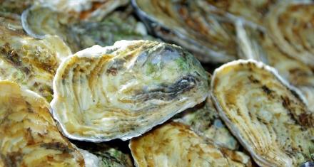 Cómo impacta la acidificación de los océanos al futuro de las ostras